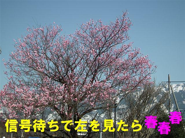 春の訪れ (1)