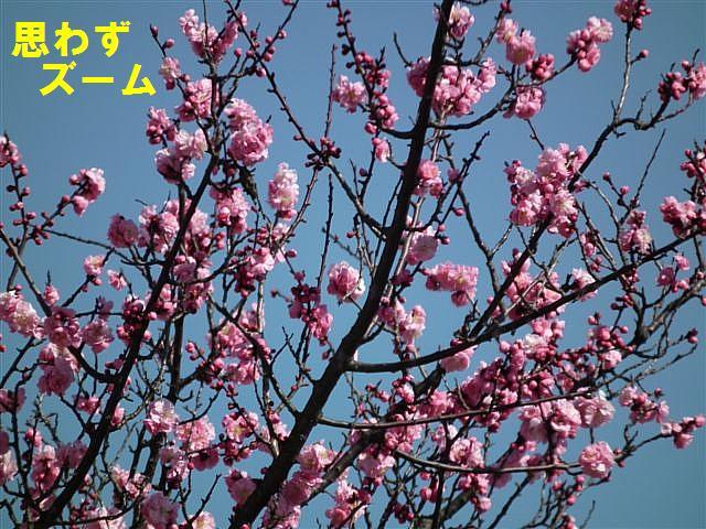 春の訪れ (2)