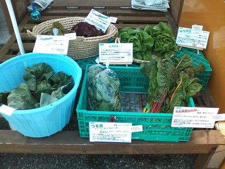 浦口ファームの野菜