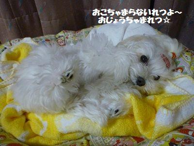 団子姉妹3
