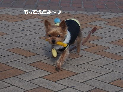 関西終14