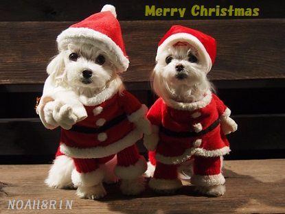 クリスマス会15