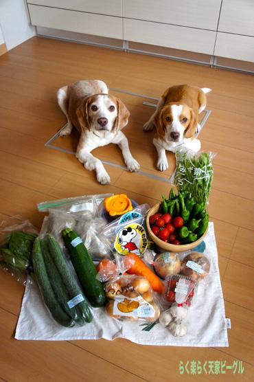 11野菜ありがとう♪DSC01759