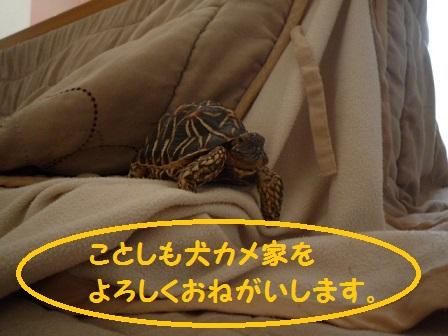 oshougatu1_2014010523300104a.jpg