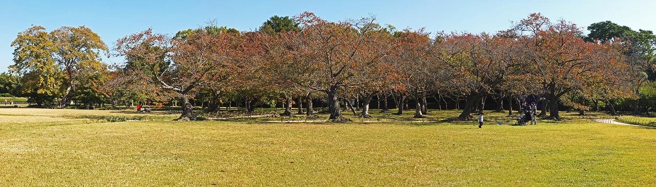s-20141030 後楽園今日の桜林の紅葉の様子ワイド風景 (1)
