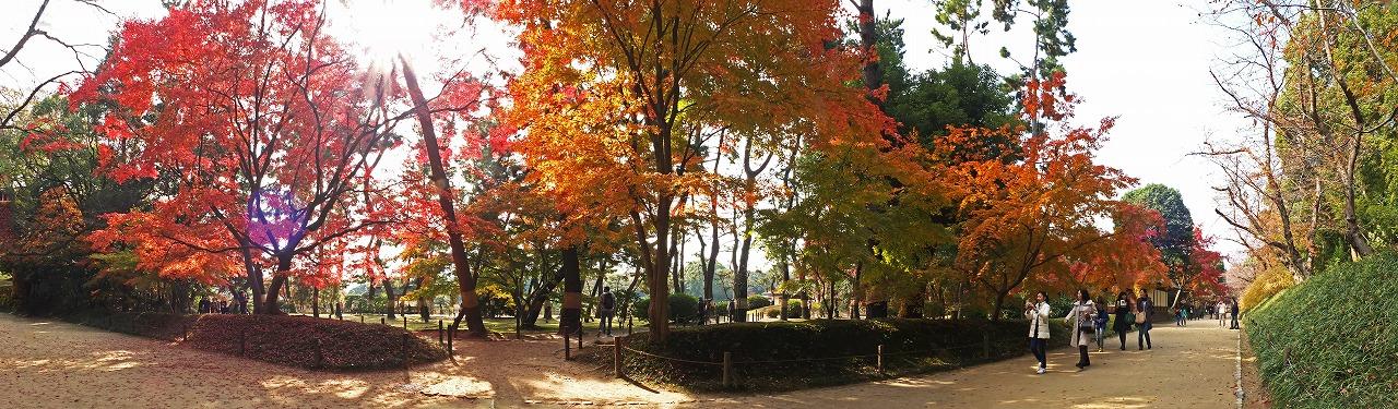 s-20141124 後楽園園内馬場の今日の紅葉のワイド風景 (1)