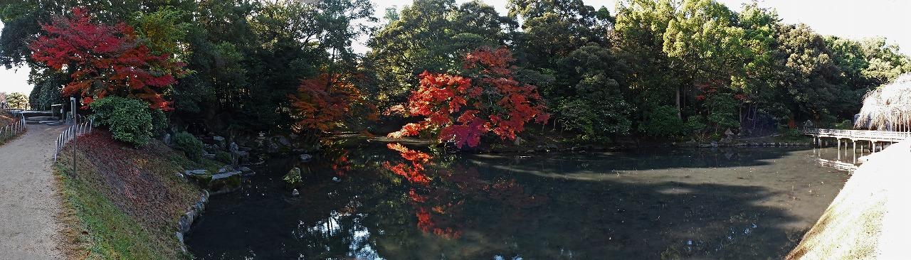 s-20141128 後楽園今日の花葉の池のワイド風景 (1)