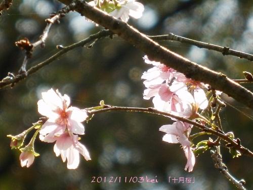 3-1_20121104104401.jpg