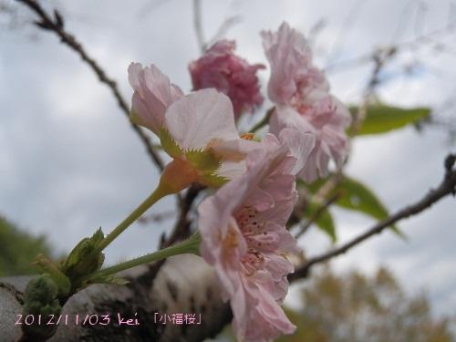 3-2_20121104104411.jpg