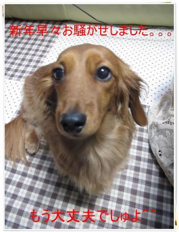 IMG_1351_convert_20120108174030.jpg
