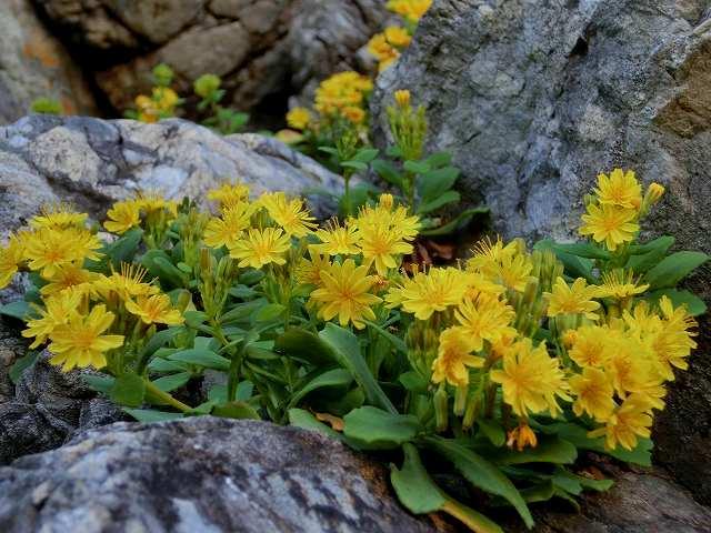 室戸の花1