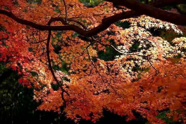 後楽園の紅葉5