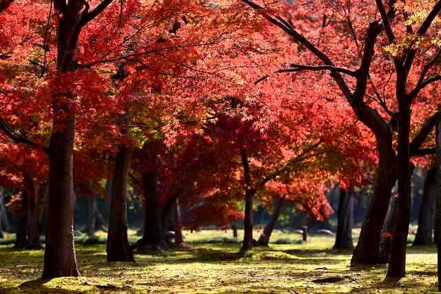 後楽園の紅葉9