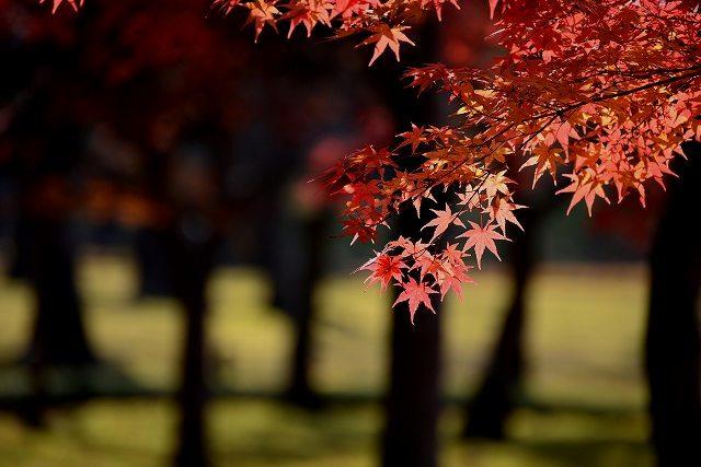 後楽園の紅葉12
