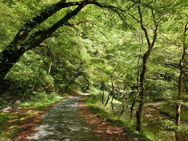 雄橋への道1