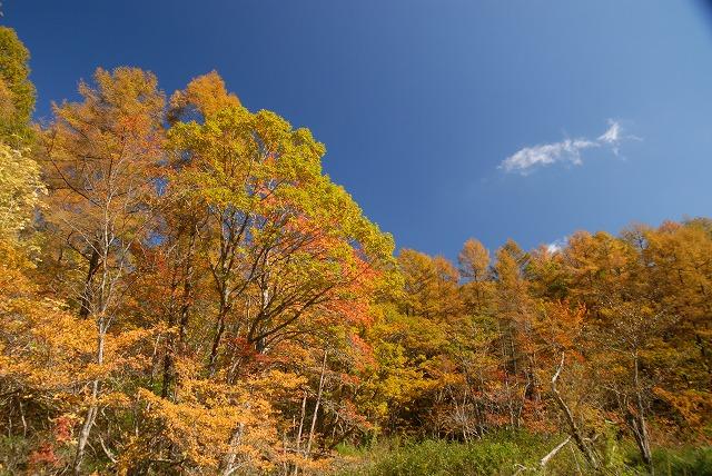 紅葉する木立1