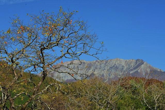 大山と柿の木