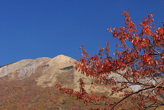 枡水高原の桜の木