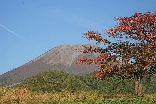 日光演習場(52号線)近くの桜の木と大山