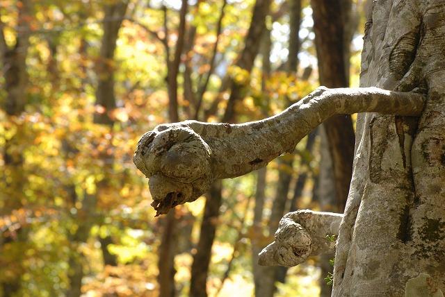 まるでE.Tのような枯れ枝