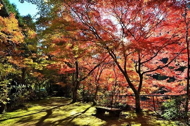 大釣公園の紅葉1