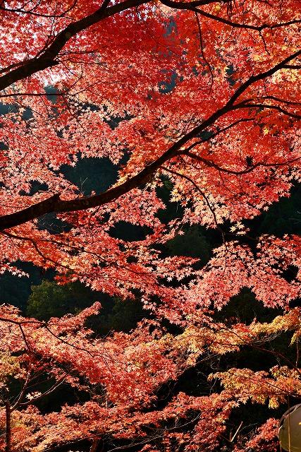 大釣公園の紅葉4