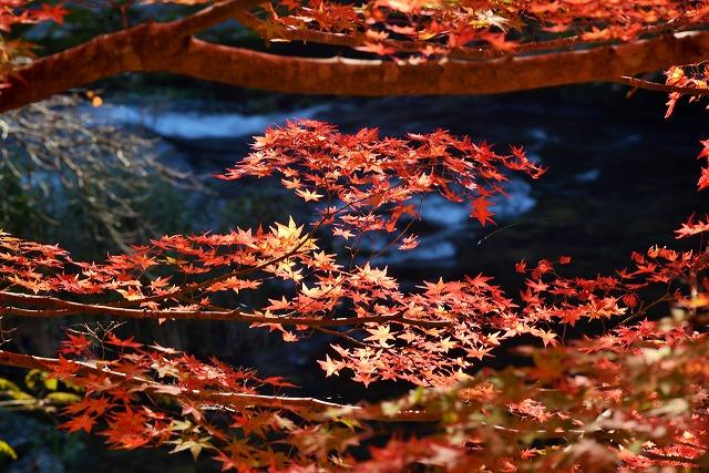 大釣公園の紅葉7