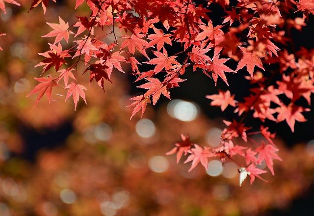 大釣公園の紅葉8