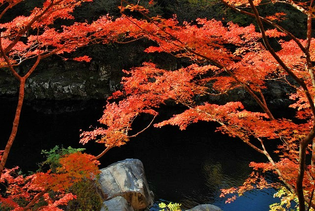 大釣公園の紅葉10