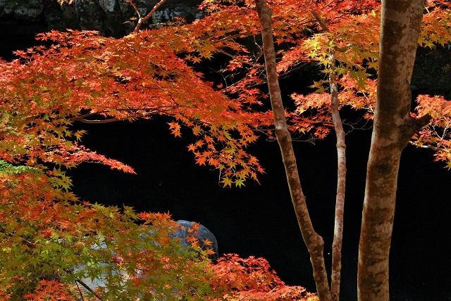 大釣公園の紅葉11