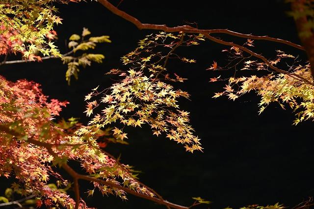 大釣公園の紅葉19