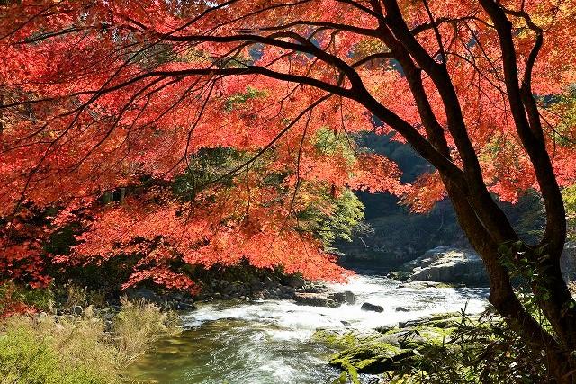 奥津渓の紅葉2
