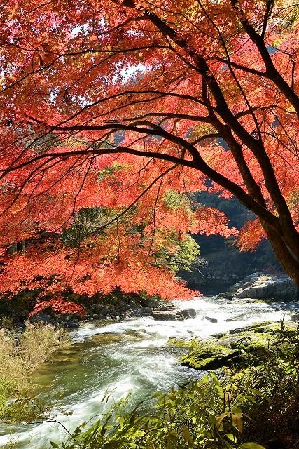 奥津渓の紅葉2-2