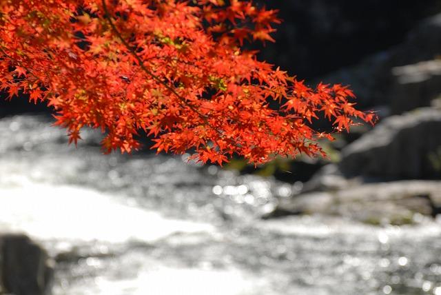 奥津渓の紅葉5