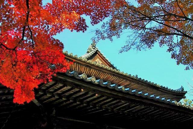 宝福寺の紅葉15