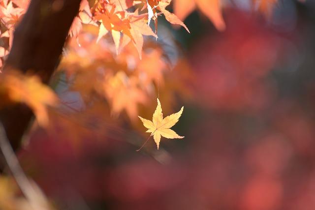 宝福寺の紅葉18