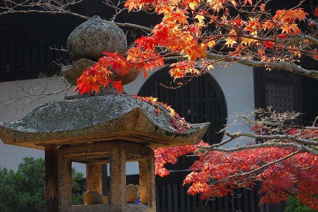 宝福寺の紅葉30
