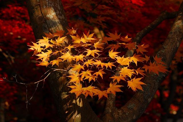 宝福寺の紅葉31