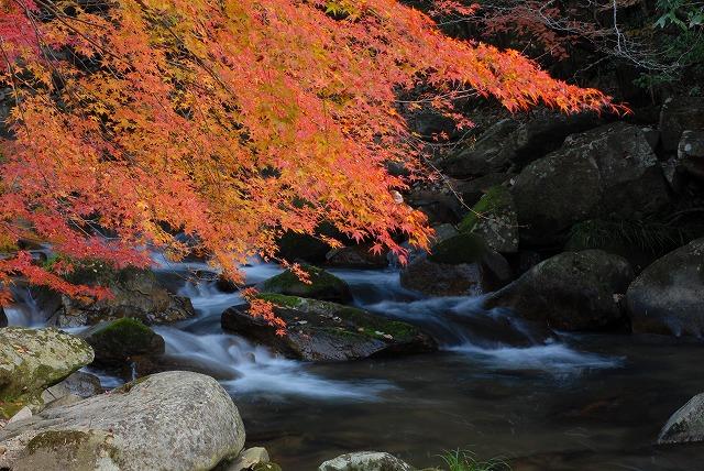 豪渓の紅葉8