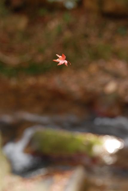 豪渓の紅葉9-2