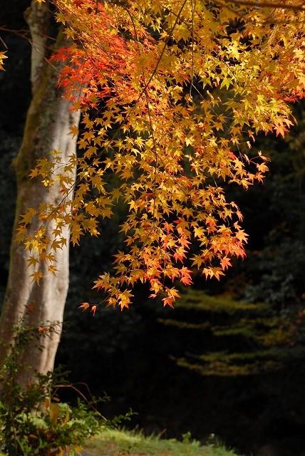 豪渓の紅葉10