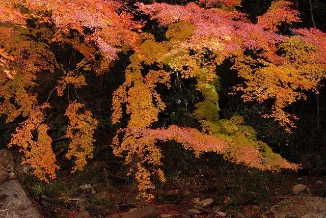 豪渓の紅葉11