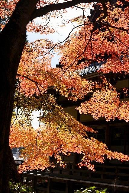 龍泉寺の紅葉6