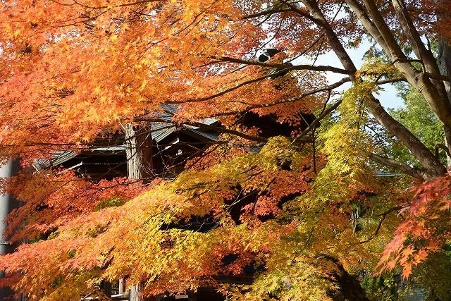 龍泉寺の紅葉9