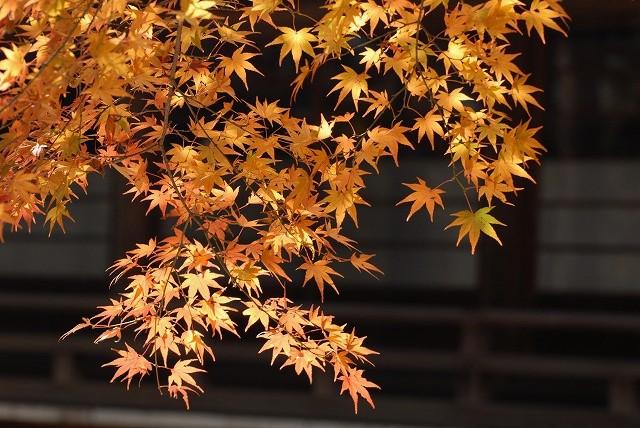 龍泉寺の紅葉15