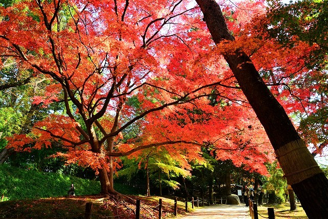 寒翠細響軒近くの紅葉