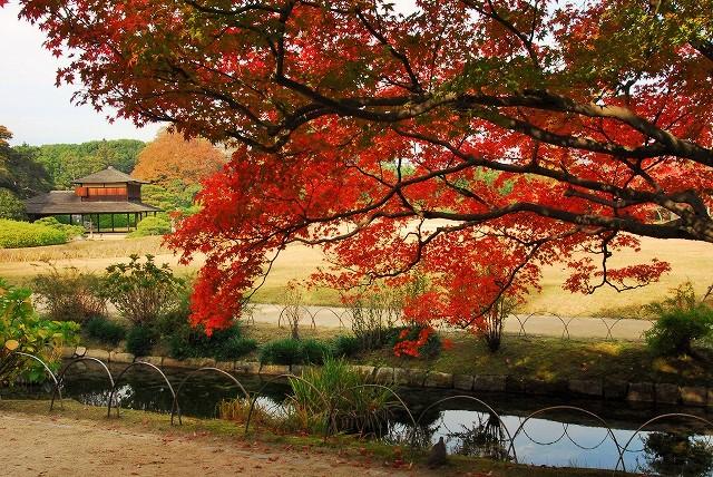 花交の池西2