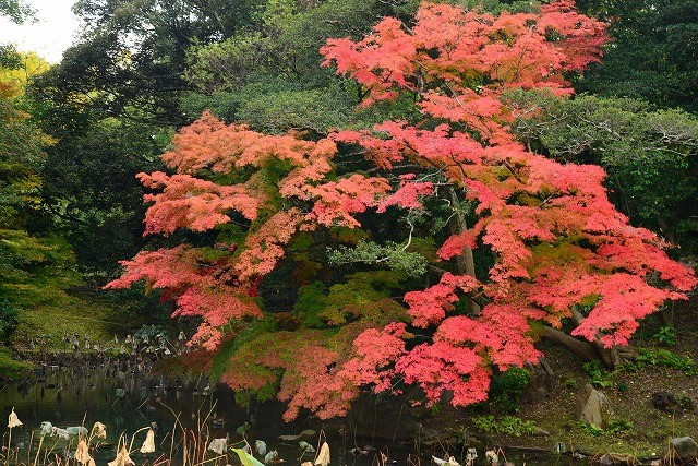 花葉の池の紅葉1