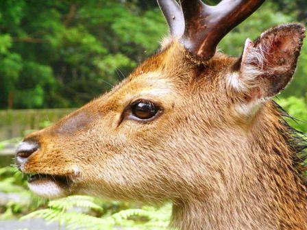 鹿(*^_^*)