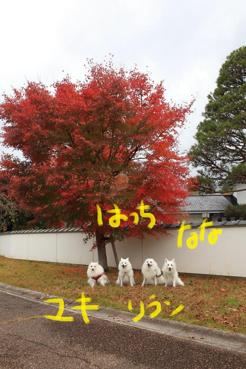 11_20141105194253c80.jpg